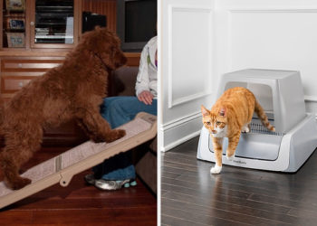 23 Practical Products From PetSmart | Buzzenga